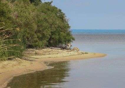 Лисиця на березі Дніпра. Фото: Сергій Біленко