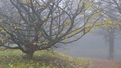 fog-337730_640