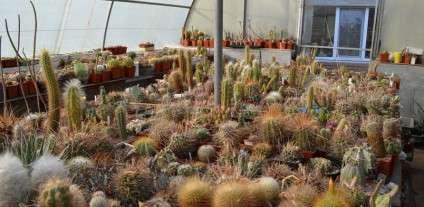 kaktusy-pingviny-magnity-chto-kollekcioniruyut.12