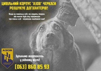 dog-1024x723-424x299