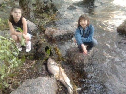 Ці дівчатка розповіли, що така рибка є не лише в Долині троянд, а і вздовж всього берегу Дніпра аж до мосту, а може й далі.
