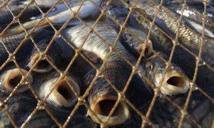 браконьєр-риба-550x330