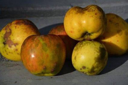 яблука зі слідами осаду