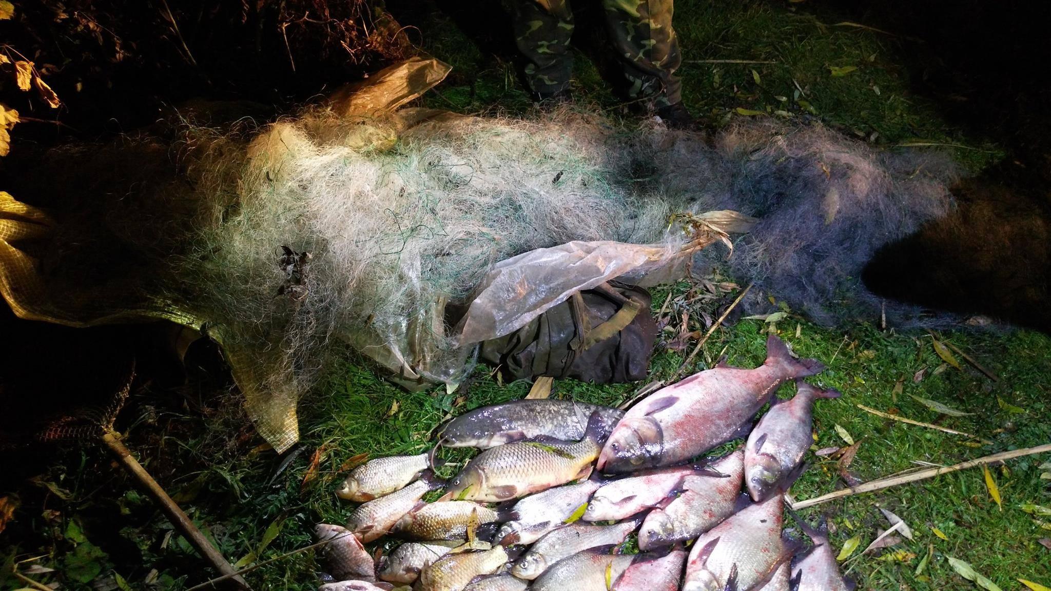 Фото дьоргалки для риби