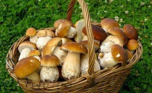 Експерти назвали найкращі місця для черкаських грибників