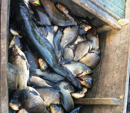 На Черкащині затримали браконьєрів із десятьма сітками риби (фото)