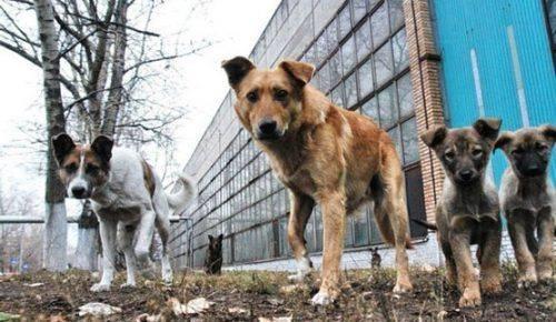 У Каневі нараховано майже 300 безпритульних собак
