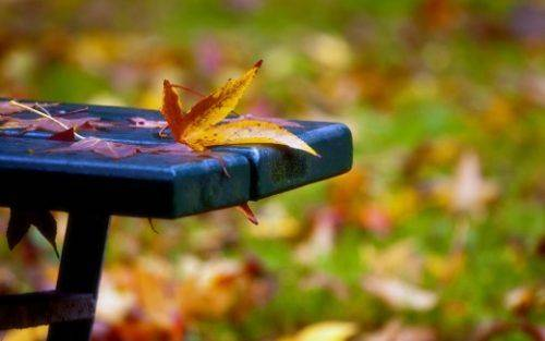 На Черкащині прогнозують осінню прохолоду