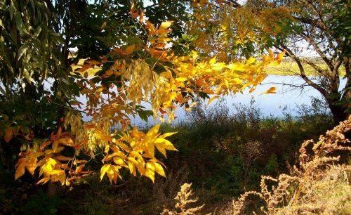 На Черкащині прогнозують ранню осінь