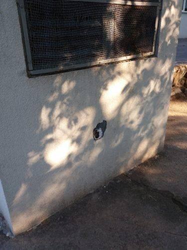 Черкаська гімназія потерпає від неповнолітніх вандалів (фото)