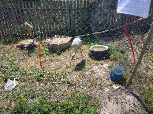 У Черкаському зоопарку поселилося маленьке лелеченя (фото)