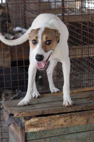 У Черкасах собака, якого повернули до притулку, досі чекає на свою родину (фото)