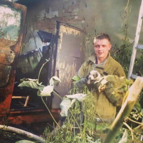 Уманські рятувальники повернули до життя цуценя, яке ледь не задихнулося під час пожежі