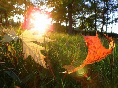 У перші дні осені на Черкащині очікується спека