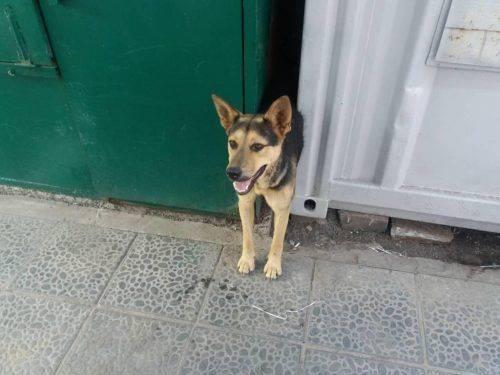У Золотоноші врятували собаку, який застряг між контейнерами (фото, відео)
