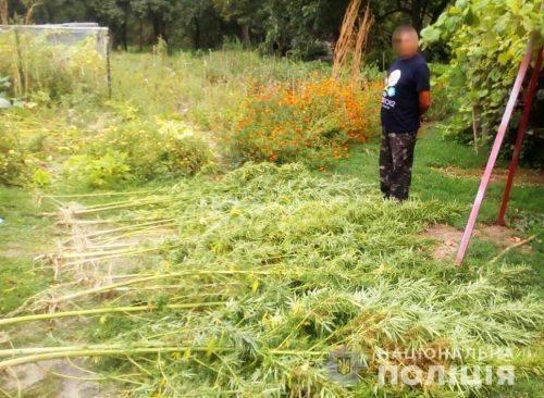 На Черкащині чоловік виростив велетенську коноплю (фото)