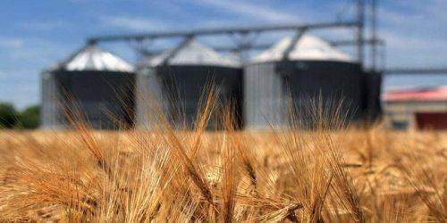 Аграрії Черкащини намолотили майже три тисячі тонн зерна