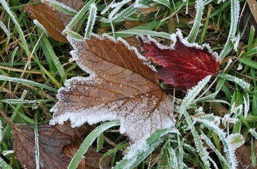 Найближчим часом у деяких районах Черкащини очікуються заморозки
