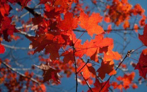 На Черкащині очікується помірно теплий жовтень