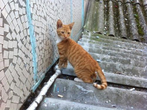 У Черкасах шукають родину для грайливого кошеня (фото)