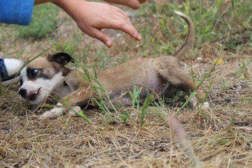 У Черкасах шукають родину для маленького цуценя (фото)