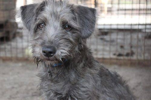У Черкасах шукають родину для розумного собаки (фото)