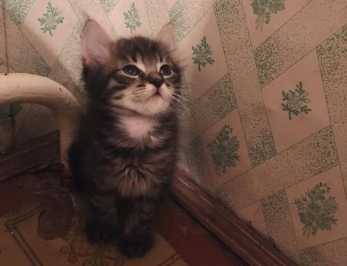На Черкащині шукають родину для маленьких кошенят (фото)
