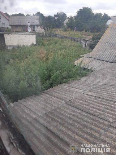 На Черкащині чоловік виростив вдома гігантську коноплю (фото)