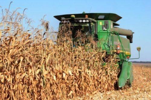 Аграрії Черкащини розпочали збір кукурудзи