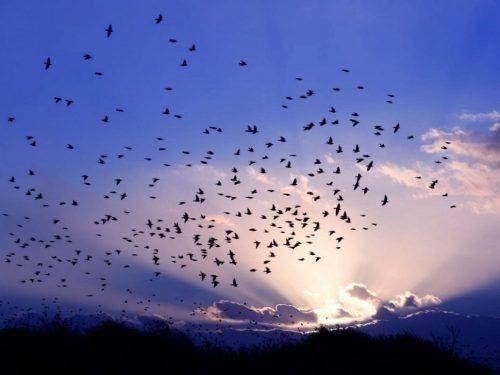 Сьогодні черкащани зможуть спостерігати за міграцією птахів