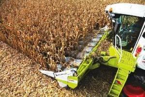 На Черкащині розпочали збір пізніх зернових культур