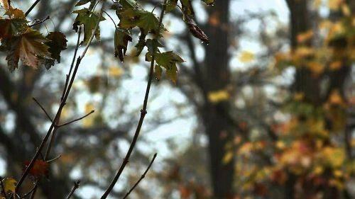На Черкащині очікується рання та холодна осінь