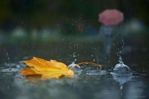 «Стрибок» в осінь: на Черкащині очікується похолодання