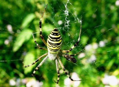 Павуки окупували газові котли черкащан