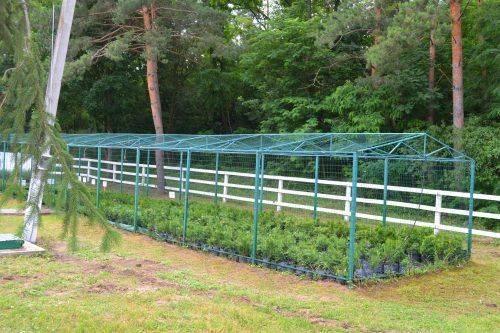Лисянські лісівники розповіли про нові підходи до вирощування посадматеріалу