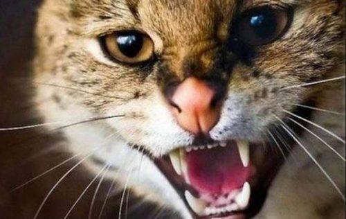 На Черкащині розпочали планову імунізацію диких тварин проти сказу