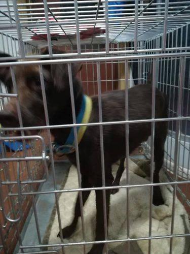 Черкащан просять допомогти зібрати кошти на лікування собаки з рідкісною хворобою (фото)