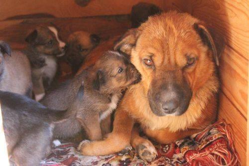 """""""Лісовий сюрприз"""": у Черкасах шукають родину для маленьких цуценят (фото)"""