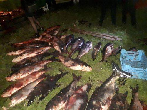 У Черкасах виявили автівку, яка перевозила 700 кг незаконно виловленої риби (фото)