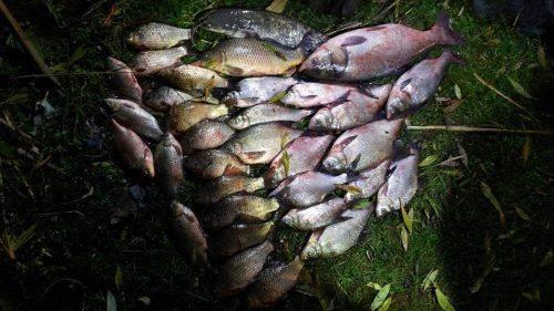 За тиждень на Черкащині браконьєри наловили риби майже на 50 тис. грн (фото)