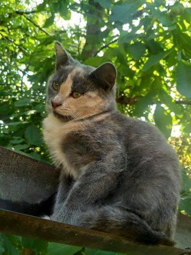 На Черкащині кошенята чекають на свою люблячу родину (фото)