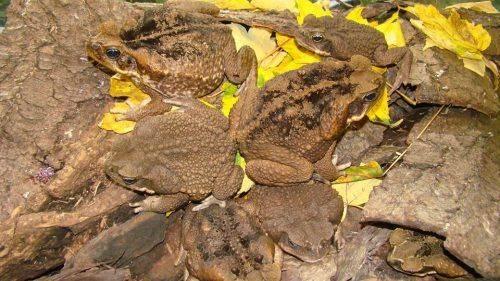 У Черкаському зоопарку з'явилася нова експозиція земноводних (фото)