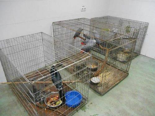 Після пожежі в черкаському зоопарку птахи-втікачі повертаються до своїх вольєрів