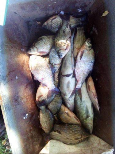 На Черкащині браконьєр виловив майже 50 кг риби (фото)