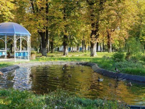 На штучній водоймі черкаського підприємства оселилися дикі качки (фото)