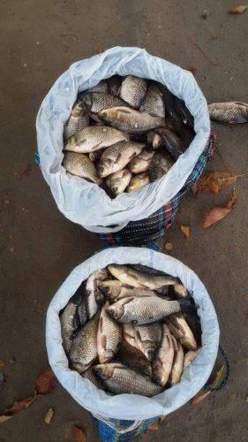 За два дні на Черкащині незаконно виловили майже 270 кг риби (фото)