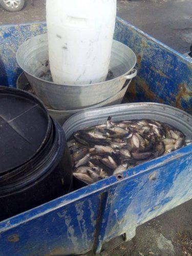 На Черкащині зафіксовано незаконний вилов 250 кг риби (фото)