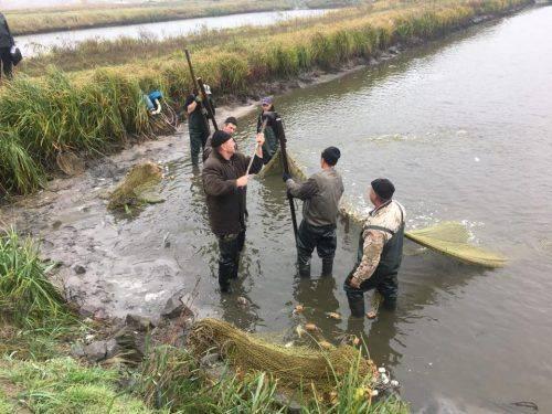 На Черкащині до Кременчуцького водосховища випустять 28 тонн товстолоба