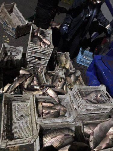 На Черкащині затримали браконьєрів, які виловили понад 1200 кг риби (фото)