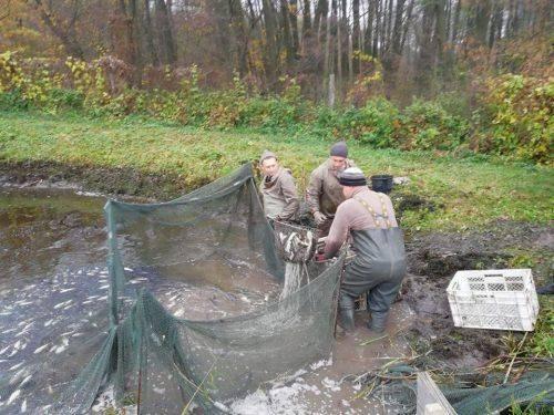 До водойм Черкащини випустили майже 35 тис. екземплярів зарибка